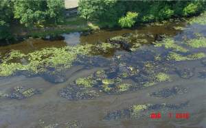 Section of Kalamazoo River with dilbit snagged on vegetation from the 6B spill.   Photo courtesy of MDEQ.
